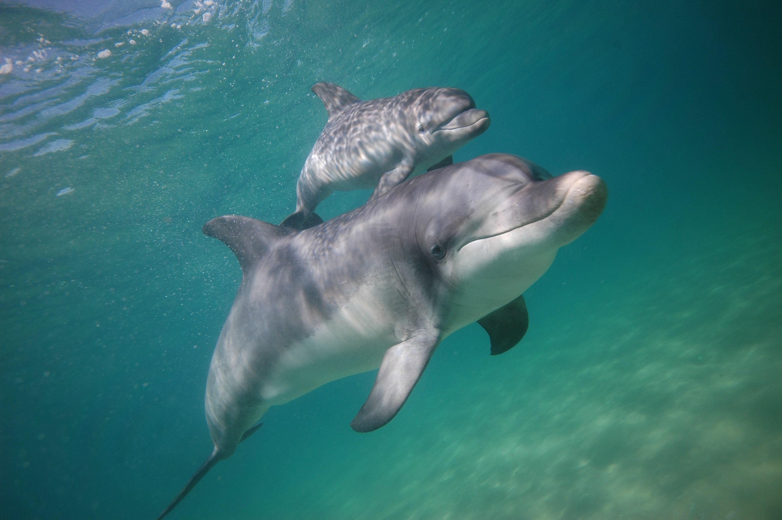 Dolphin-discovery-centre-photo